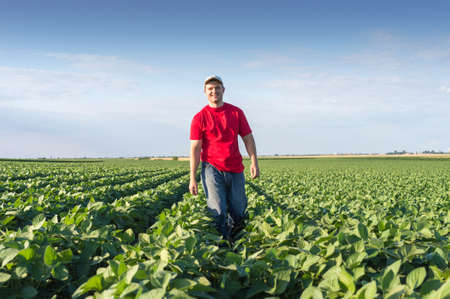 verduras verdes: Granjero joven en campos de soja Foto de archivo