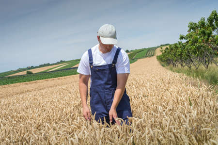 young farmer: Young farmer in wheat fields Stock Photo