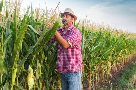 agricultor: Granjero en un campo de maíz