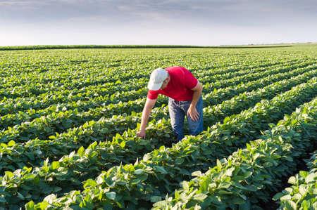 horizontal lines: Granjero joven en campos de soja Foto de archivo