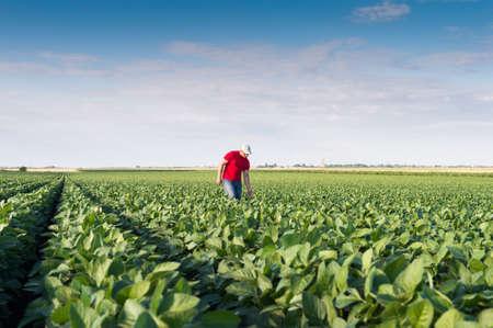 Young farmer in soybean fields