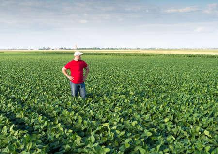 soybean: Young farmer in soybean fields