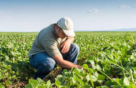 agricultura: Granjero joven en campos de soja Foto de archivo