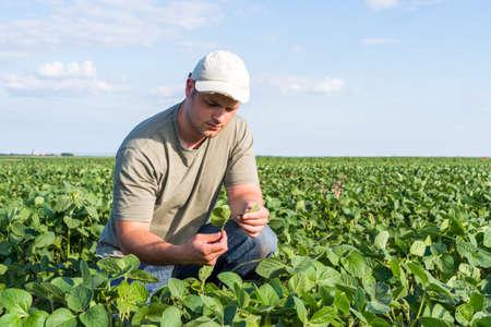 granjero: Granjero joven en campos de soja Foto de archivo