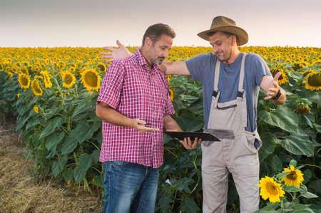 food inspection: Farmers in a field of sunflowers