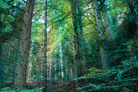 undergrowth: coniferous forest landscape in summer Stock Photo