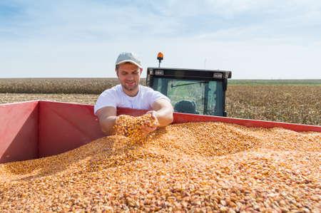 mazorca de maiz: Trabajador que sostiene el maíz después de la cosecha Foto de archivo