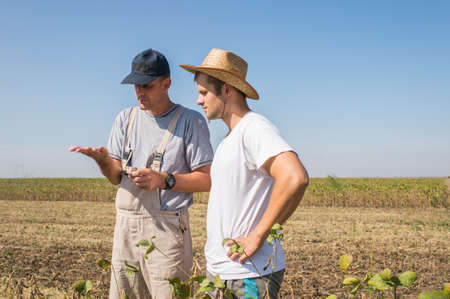 soybean: Young farmer in soybean fields