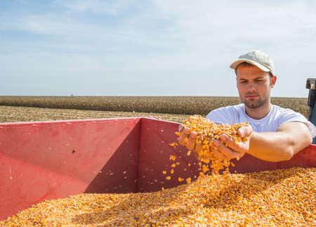 hombres jovenes: Trabajador que sostiene el ma�z despu�s de la cosecha Foto de archivo
