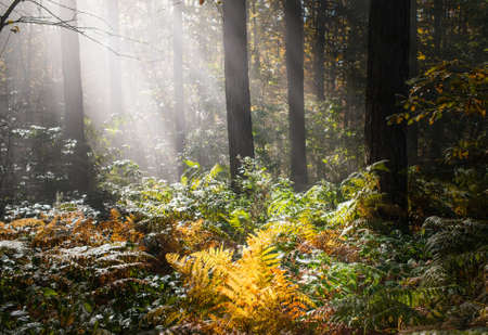 fog forest: Autumn forest in the fog Stock Photo