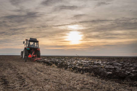 field sunset: Tractor plowing field at sunset
