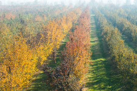 late fall: Orchard apples in late fall