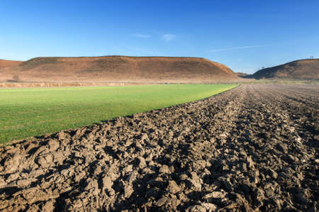 plowed field: plowed field in the morning