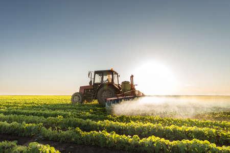 crop sprayer: Tractor spraying soybean field at spring Stock Photo