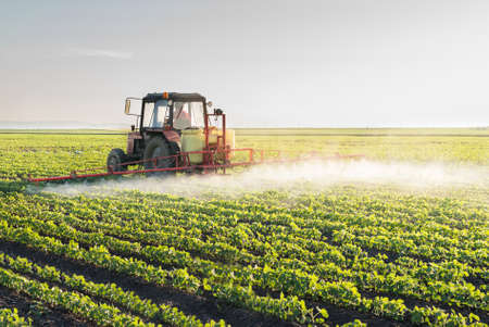soybean: Tractor spraying soybean field at spring Stock Photo