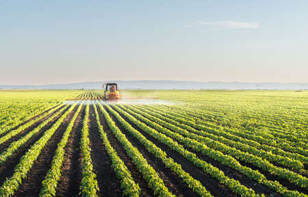 Tractor spraying soybean field at spring Archivio Fotografico