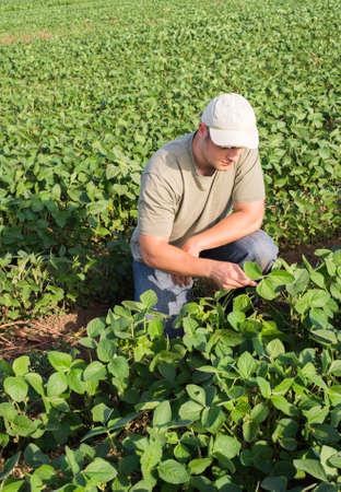 agronomist: Young farmer in soybean fields