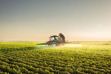 crop sprayer: Tractor spraying pesticides on soybean