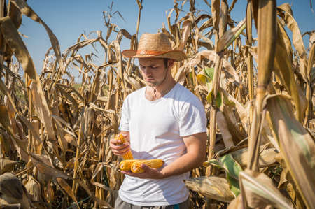 agriculturist: Agriculturist in field of corn