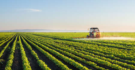 Tractor spraying soybean field at spring Stok Fotoğraf