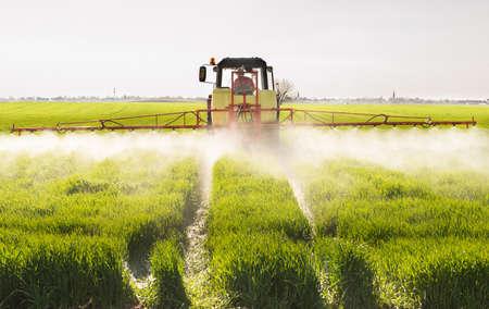 Trattore che spruzza campo di grano con spruzzatore