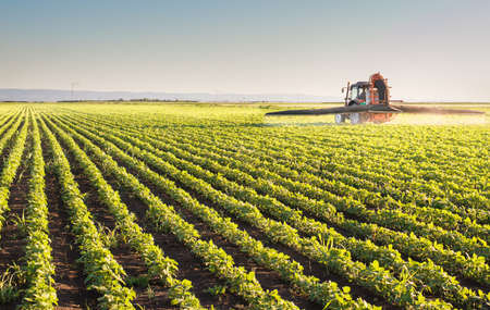 soybean: Tractor spraying pesticides on soybean