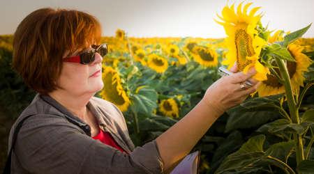 agronomist: Agriculture, female farmer or agronomist in sunflower field Stock Photo