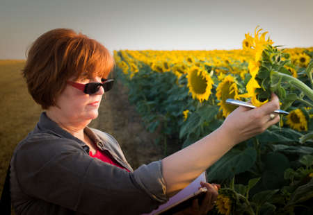 agronomist: Agriculture, female farmer or agronomist in sunflower field Stock Photo