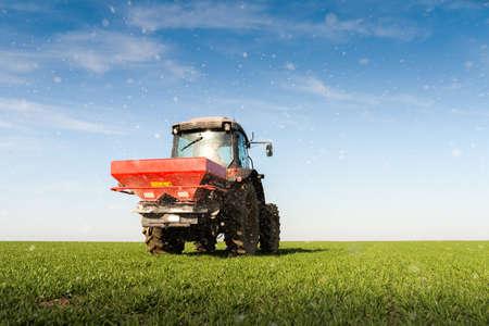 farm field: tractor fertilizing in wheat field