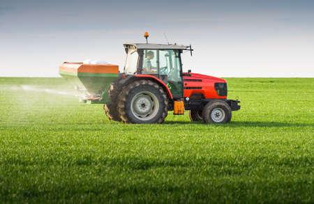 fertilizing: tractor fertilizing in wheat field
