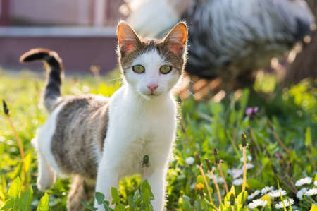 frisky: sweet cat in the grass