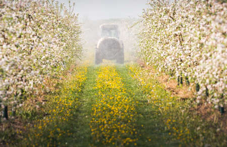 insecticide: Tractor sprays insecticide in apple orchard