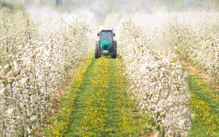 Traktor sprüht Insektizid in Apfelgarten