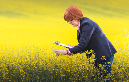oil rape: Agricultural expert inspecting quality of oil rape Stock Photo