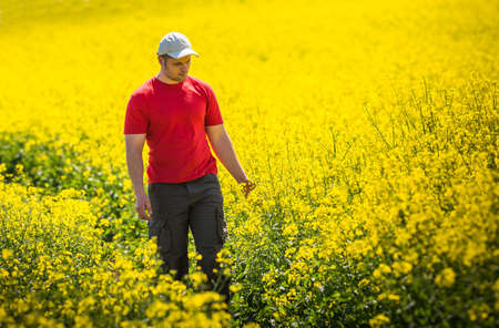 canola: Young Man in Canola Field Stock Photo