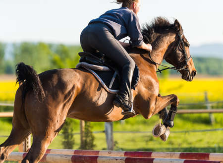 girl on horse: girl jumping with brown horse Stock Photo