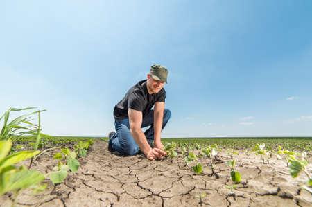 young farmer: Young farmer in soybean fields