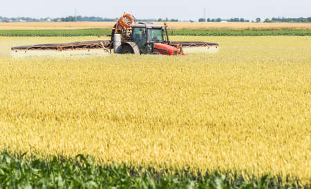sprayer: Tractor spraying wheat field with sprayer