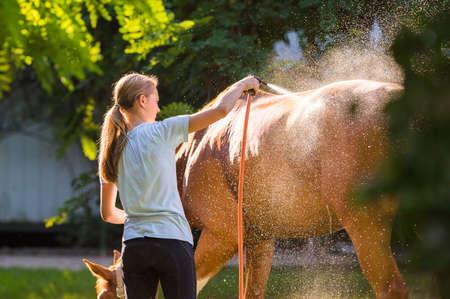rinse spray hose: Horse enjoying the shower outdoor Stock Photo