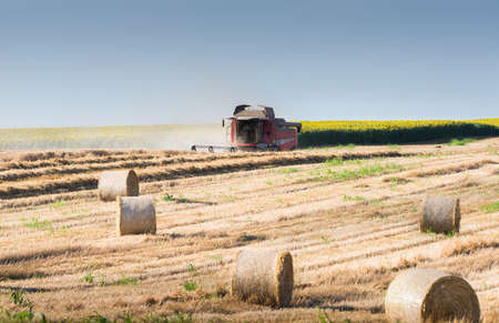 Harvesting of wheat field and the straw bales