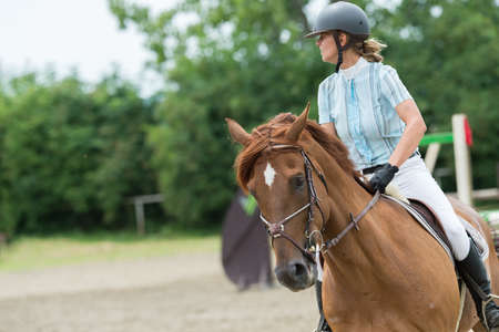 cavallo che salta: Equestrian Sports, Horse jumping, Show Jumping, Horse Riding Archivio Fotografico