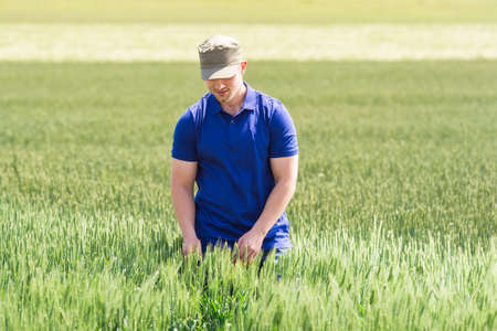 young farmer: young farmer in a field of wheat