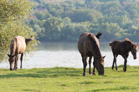 Horses on a summer pasture Stock Photo