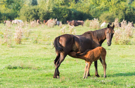A mare stands alongside its foal Stock Photo