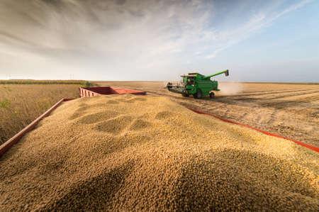 Habas de soja en tractor remolque Foto de archivo - 64217202