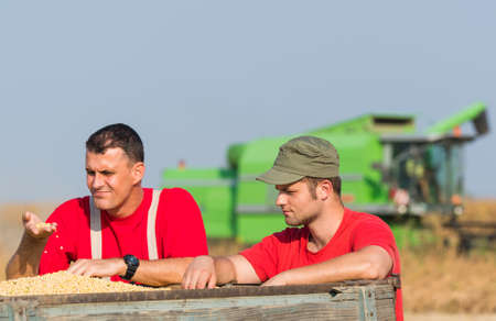 to examine: Young Farmers examine soyabean in trailer after harvest
