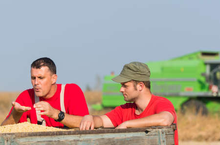 examine: Young Farmers examine soya bean in trailer after harvest