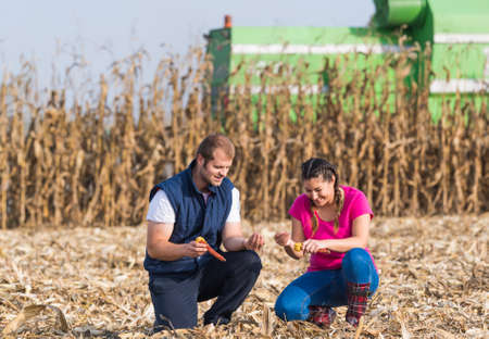 수확기 동안 옥수수 밭에서 젊은 농부들