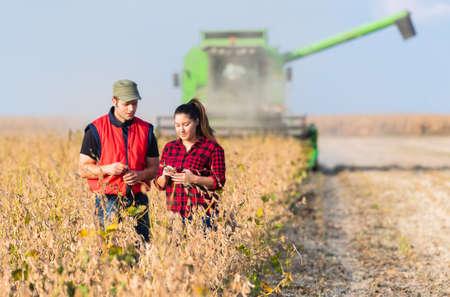 収穫前に、の大豆畑の若い農家
