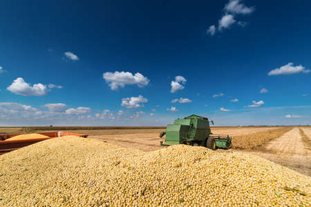 monoculture: Soy beans in tractor trailer Stock Photo